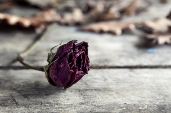 Dried rose on old vintage wood plates